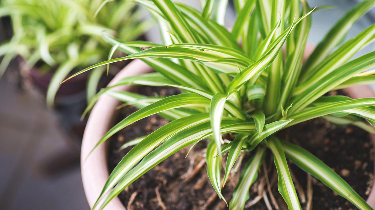 11 piante da appartamento per purificare l 39 aria di casa for Piante di case