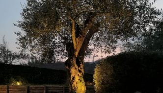 Illuminazione Alberi Faretti LED a Picchetto